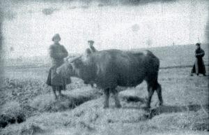 Cina 1907 Hankowp