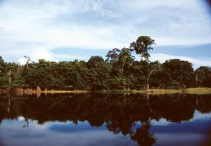 27 O Amaz alberi riflessi
