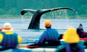 Cargo balena