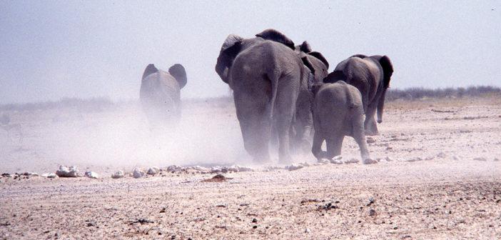 Namibia: la terra dei contrasti – il deserto che vive