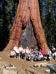 Gruppo_albero521