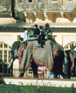 India Elefante