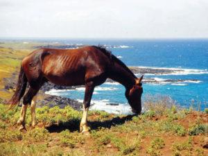 Isola di Pasqua cavallo