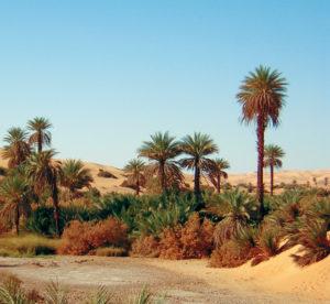 Libia Bacci 165 oasi