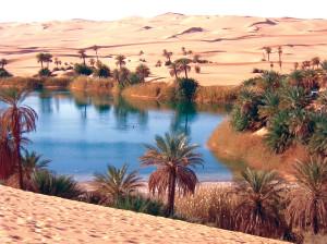Libia Bacci 231 oasi bagnan