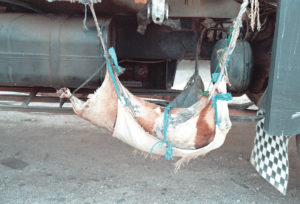 Ghirba di un camionista