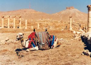 Palmyra in alto il Castello di Qalaat