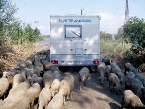 Il traffico in Albania