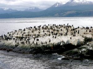 Scoglio Pinguini