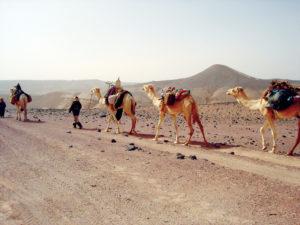 Tunisia Carovana
