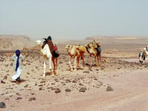 Tunisia Carovana davanti