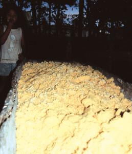 V Amaz manioca 36